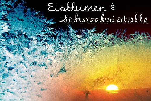 W01 - EisblumenSchneekristalle